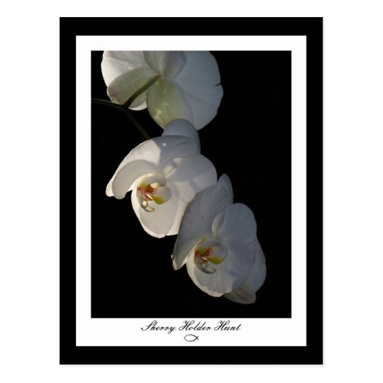 Orchid 002 Postcard
