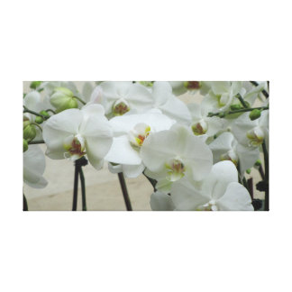 Orchid #2 canvas print