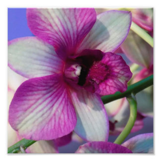 Orchid Bloom Photo Print