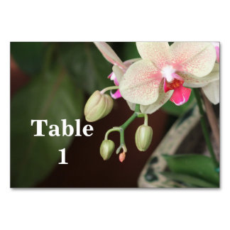 Orchid Blooms Card