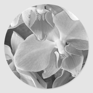 Orchid blooms closeup in grayscale classic round sticker