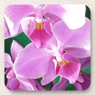 Orchid blooms closeup in pink coaster