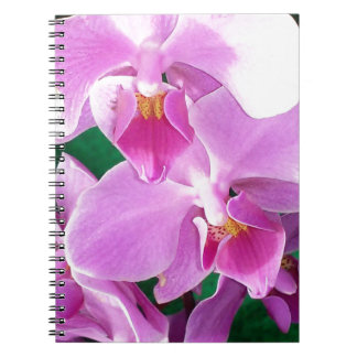 Orchid blooms closeup in pink notebooks