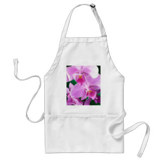 Orchid blooms closeup in pink standard apron