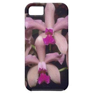 Orchid, (Cattleya amethystoglossa), Eastern iPhone 5 Cases
