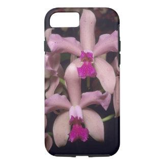 Orchid, (Cattleya amethystoglossa), Eastern iPhone 7 Case