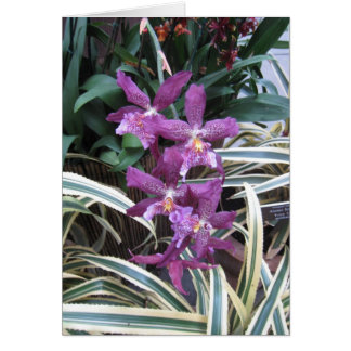 Orchid Cluster Note Card