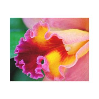 Orchid Colors Canvas Print