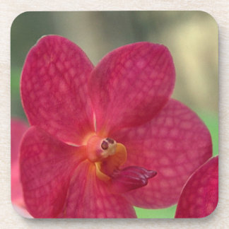 Orchid Faces Coasters - set of 6