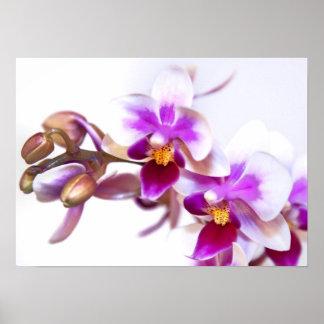 Orchid flora Office Personalize Destiny Destiny'S Poster