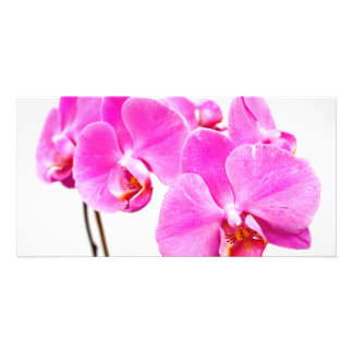 Orchid flowers closeup picture card