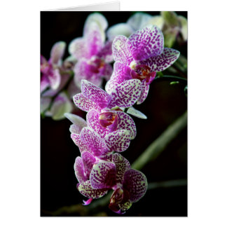 Orchid Flowers Photo Note Card