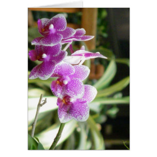 orchid greeting card flower art