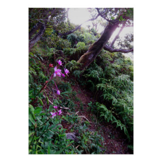 Orchid Hiking Trail Poster