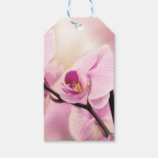 orchid in bloom gift tags