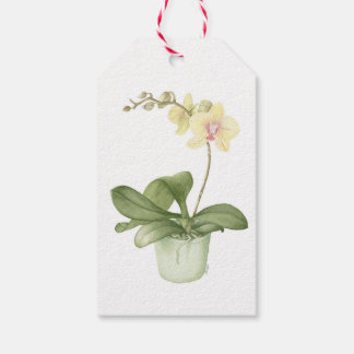 Orchid in Green Pot Botanical Watercolour Gift Tags