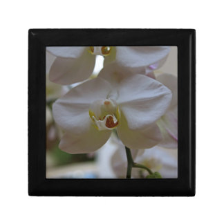 Orchid in White Small Square Gift Box