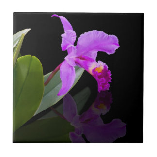 Orchid on Black Tile