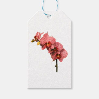 Orchid Party Personalize Destiny Destiny'S Gift Tags