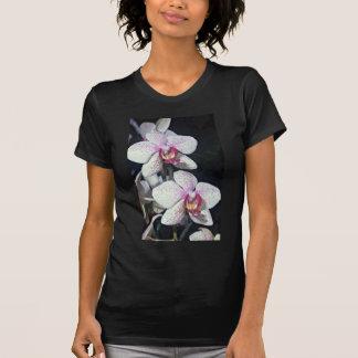 Orchid, phalaenopsis-hybrid (musterlandstern)  flo tshirts