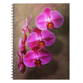 Orchid - Phalaenopsis - The moth orchid Notebook