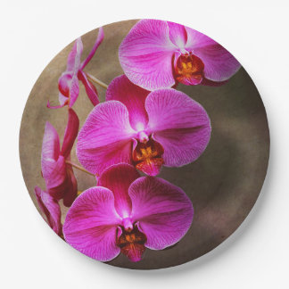 Orchid - Phalaenopsis - The moth orchid Paper Plate