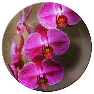 Orchid - Phalaenopsis - The moth orchid Plate