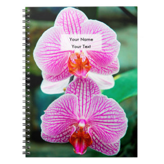 Orchid Pink Asian Flower Notebook