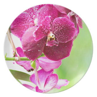 orchid plate