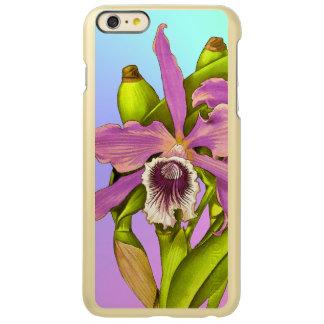 Orchid Pop