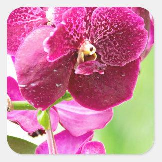 orchid square sticker