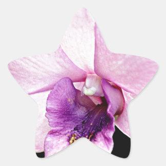 Orchid Star Sticker
