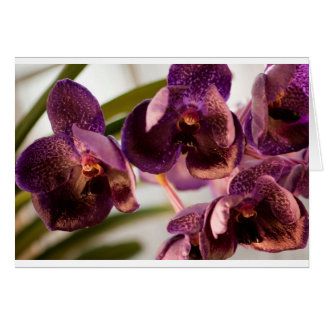 Orchid Vanda Pure's Wax Flower Group Card