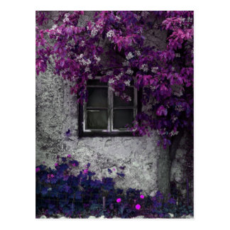 Orchid Vines, Window and Gray Stone Postcard