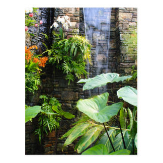 Orchid Wall Postcard