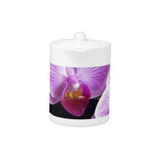 orchids-837420_640