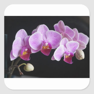 orchids-837420_640 square sticker