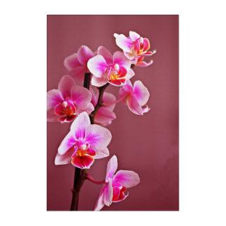 Orchids Acrylic Wall Art