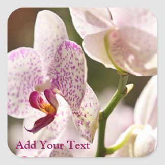 Orchids by Shirley Taylor Square Sticker