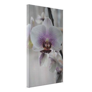 Orchids (Canvas) Canvas Print