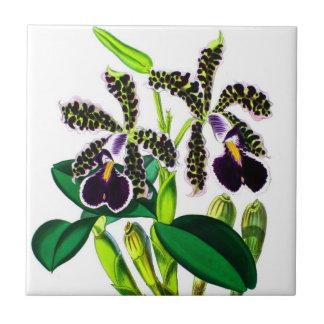 Orchids Ceramic Tile