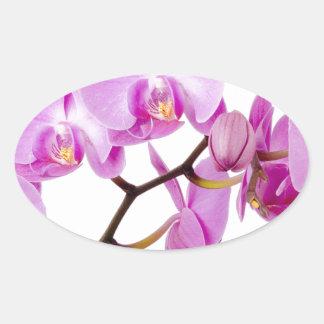 orchids-flowers.jpg oval sticker