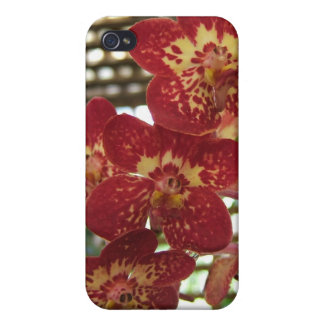 Orchids - iPhone Case iPhone 4/4S Case