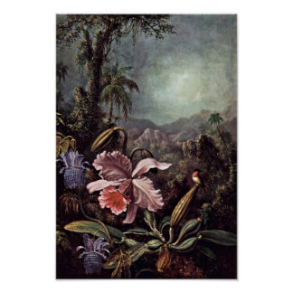 Orchids Passion Flowers And Hummingbirds By Martin Poster