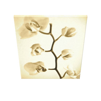 Orchids {Sepia} | Wrapped Canvas