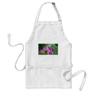 orchids standard apron