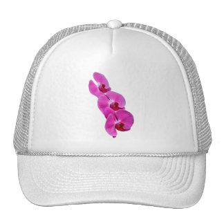 Orchis Cap