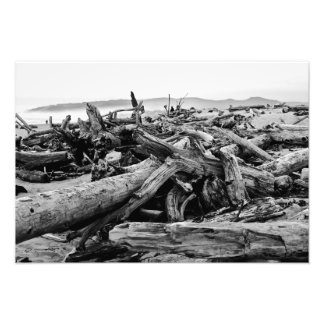 Oregon Coast Driftwood Black and White Print