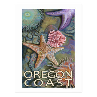 Oregon Coast Tidepool Postcard
