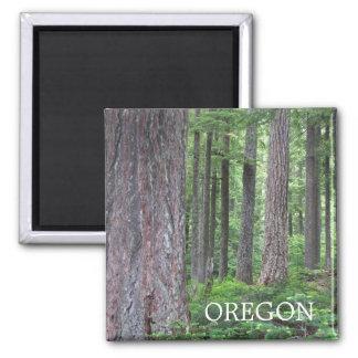 Oregon Forest Photo Square Magnet